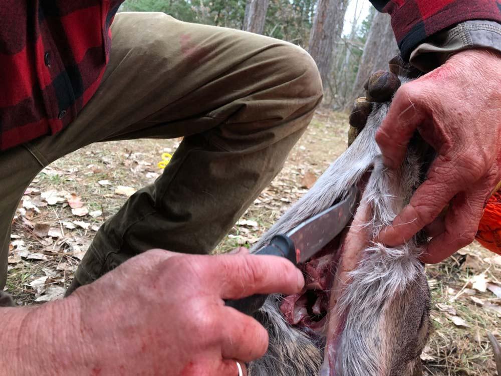 removing deer tongue