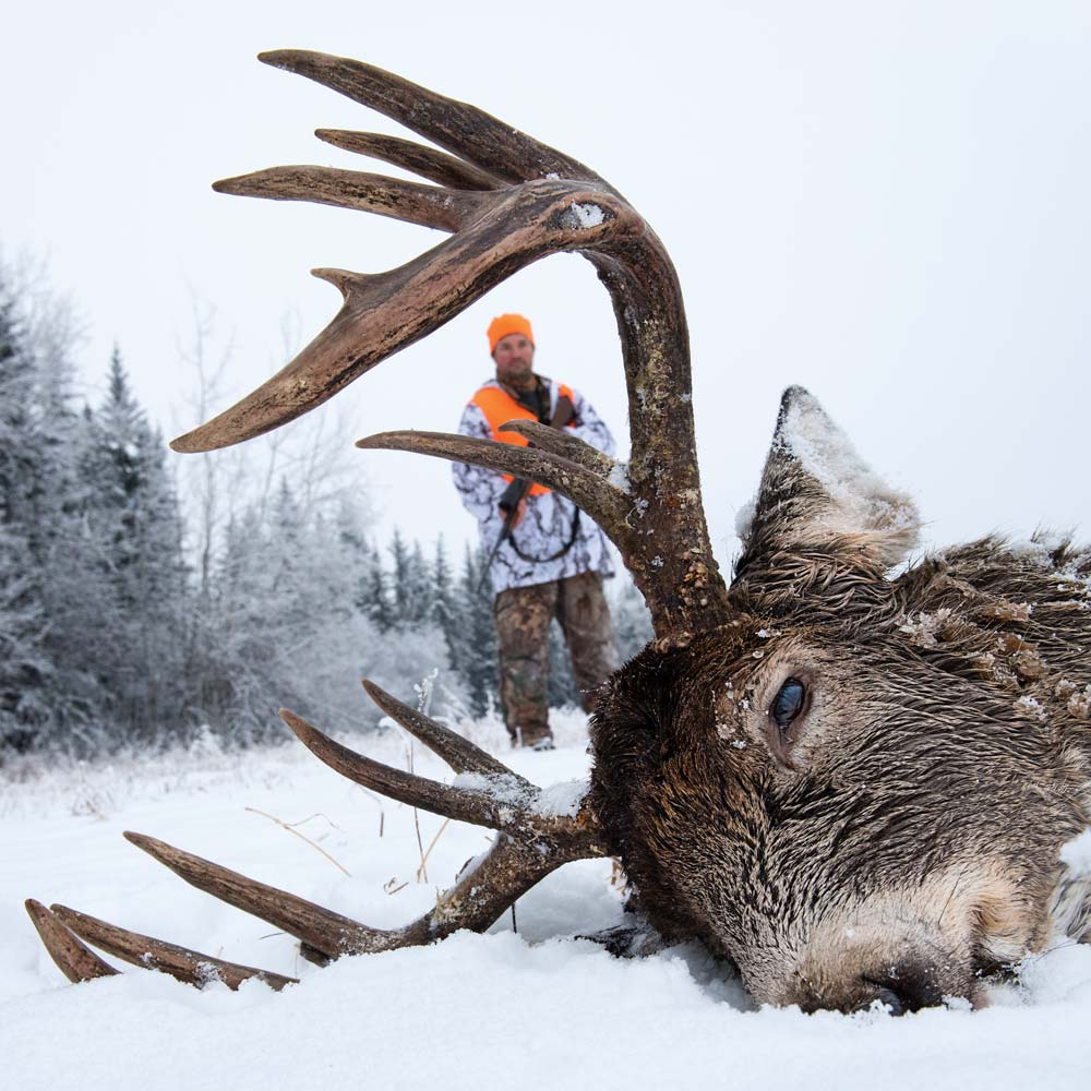 Tracking a late-season Adirondack buck