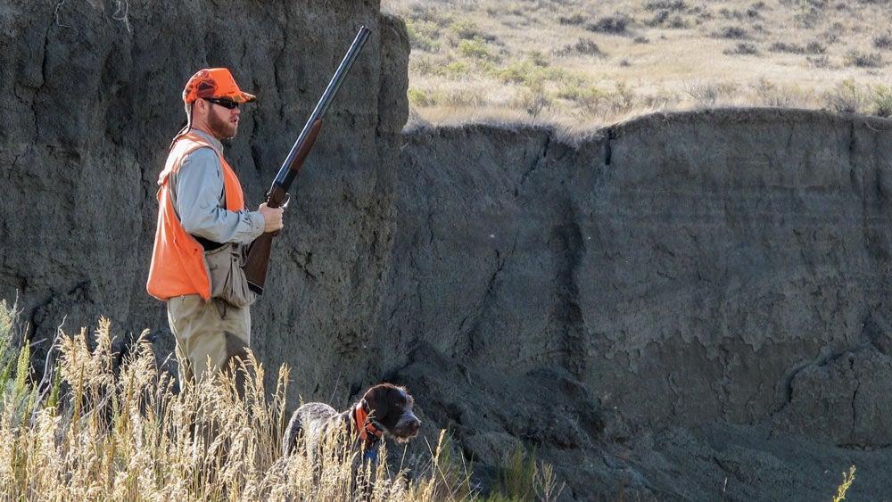 Land Tawny hunting public land
