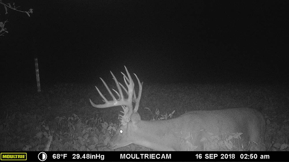 giant buck caught on trail cam at night