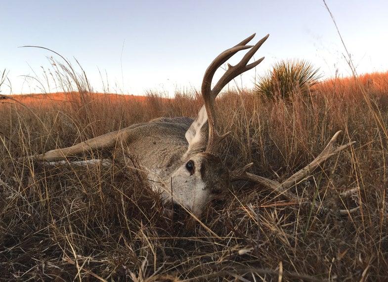 nebraska mule deer buck