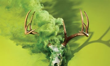 Four Things Hunters Should Know About Chronic Wasting Disease