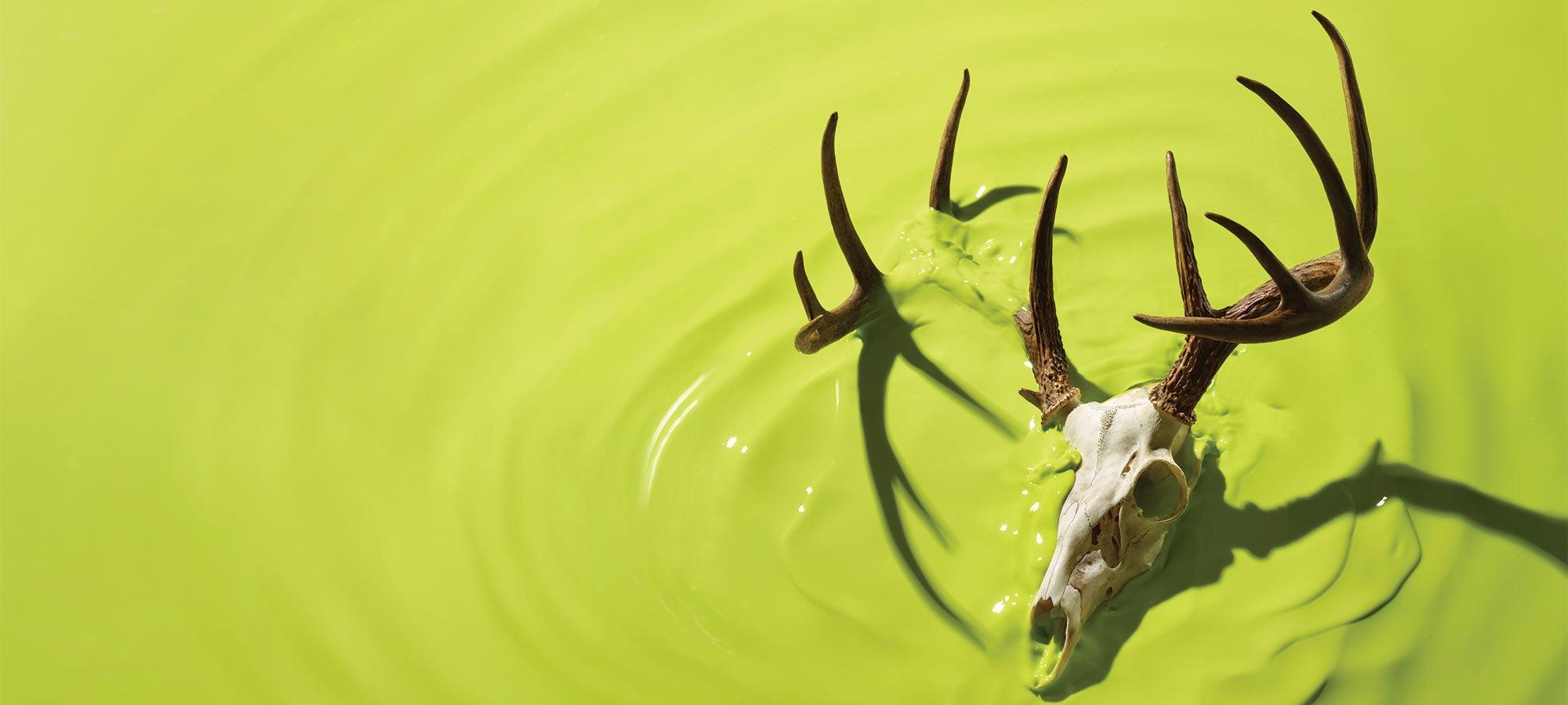 deer skull and antlers in green liquid