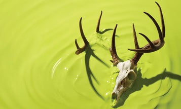 The Deer Plague: An Inside Look at the Fight to Stop Chronic Wasting Disease