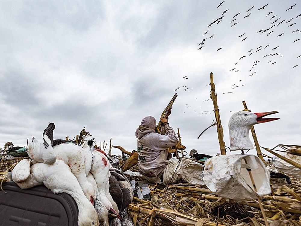 waterfowl hunter shooting at snow geese