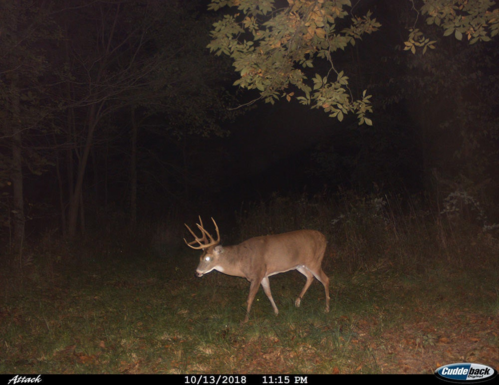 deer caught on trail camera at night