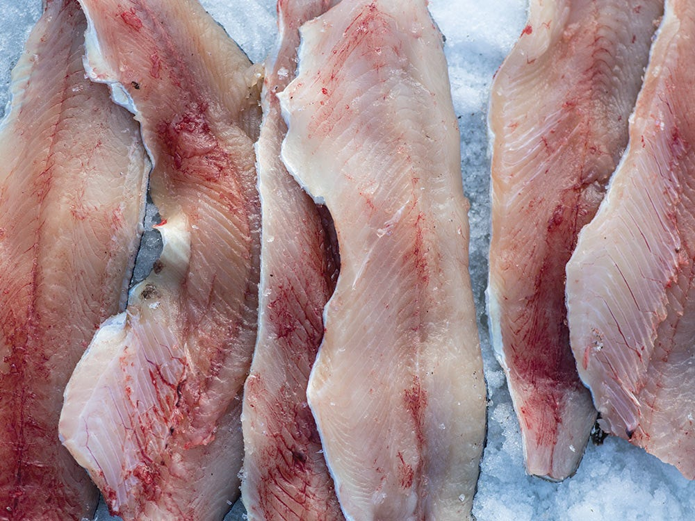 fillets of trout on ice