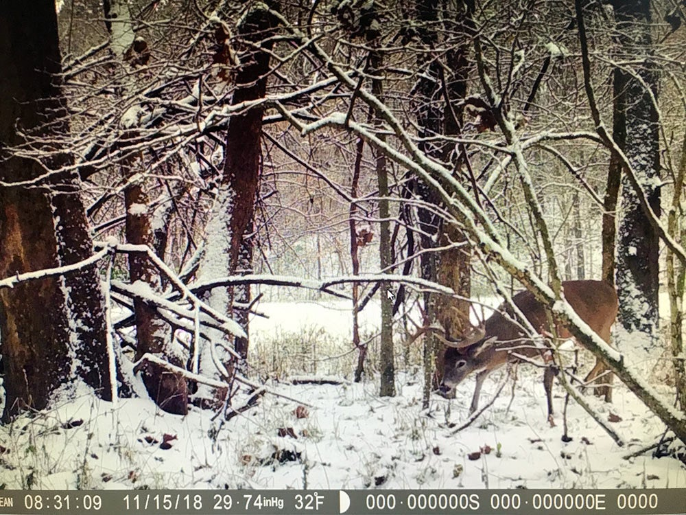 buck caught on trail camera