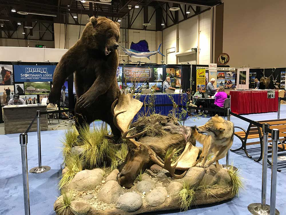 safari club international convention brown bear taxidermy