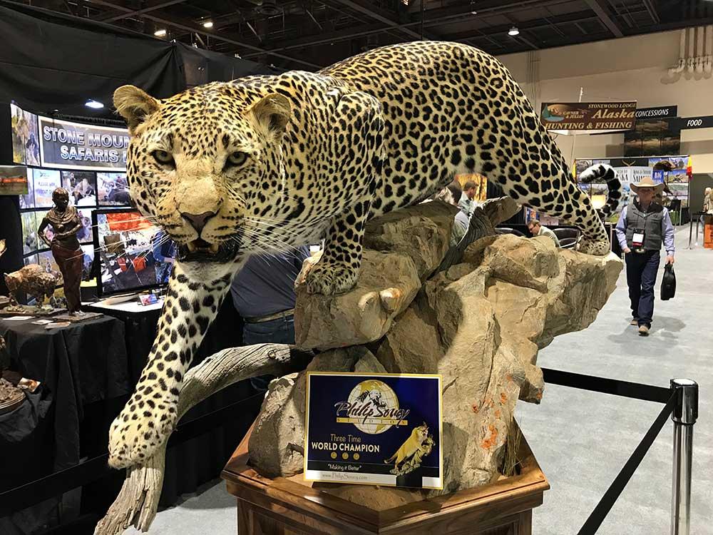 safari club international convention leopard taxidermy
