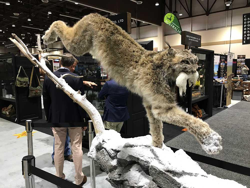 safari club international convention lynx taxidermy