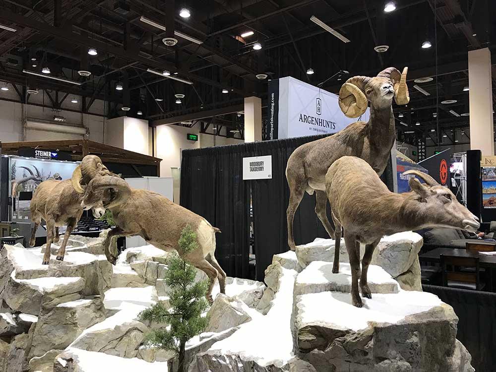 safari club international convention ram taxidermy