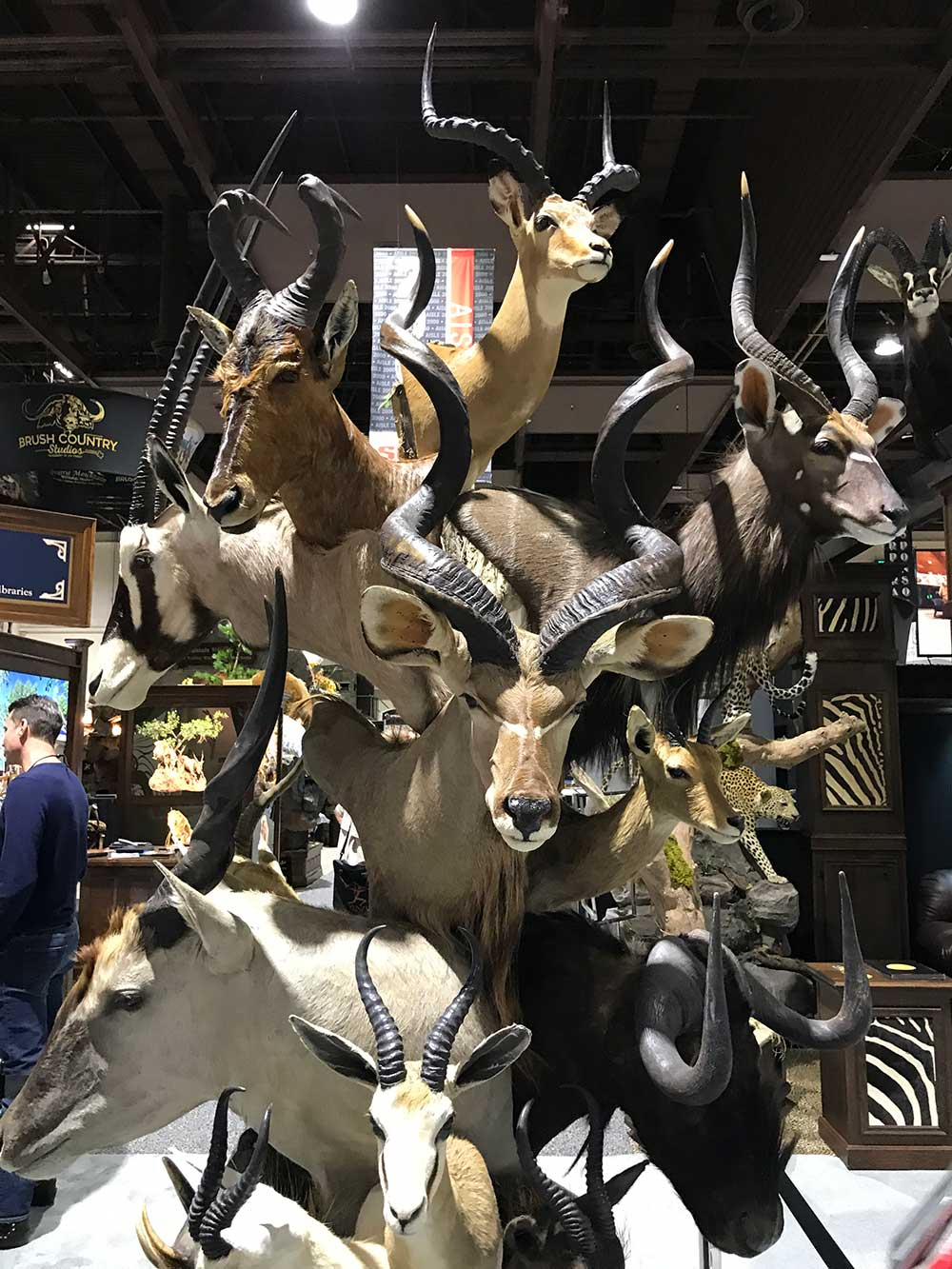 safari club international convention antelope taxidermy