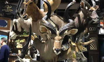 SCI Taxidermy: 22 Of The Greatest Mounts You've Ever Seen