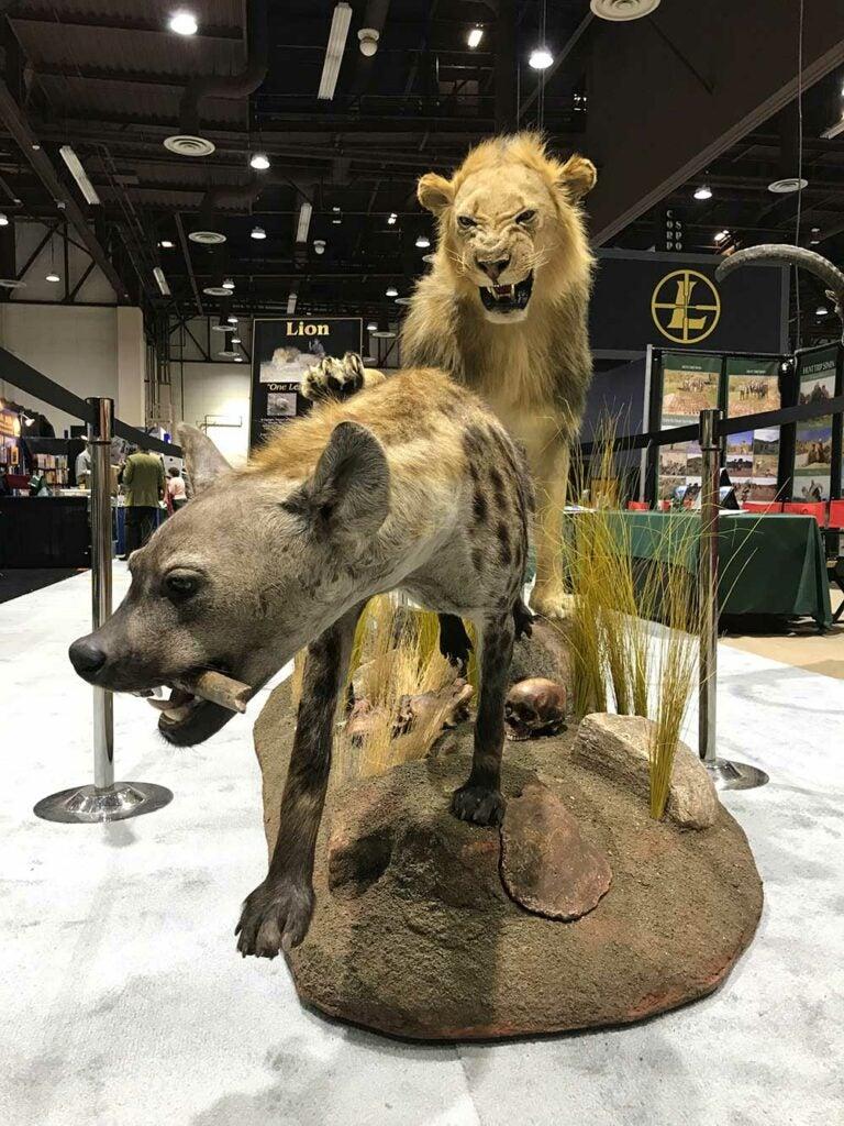 safari club international convention hyena taxidermy