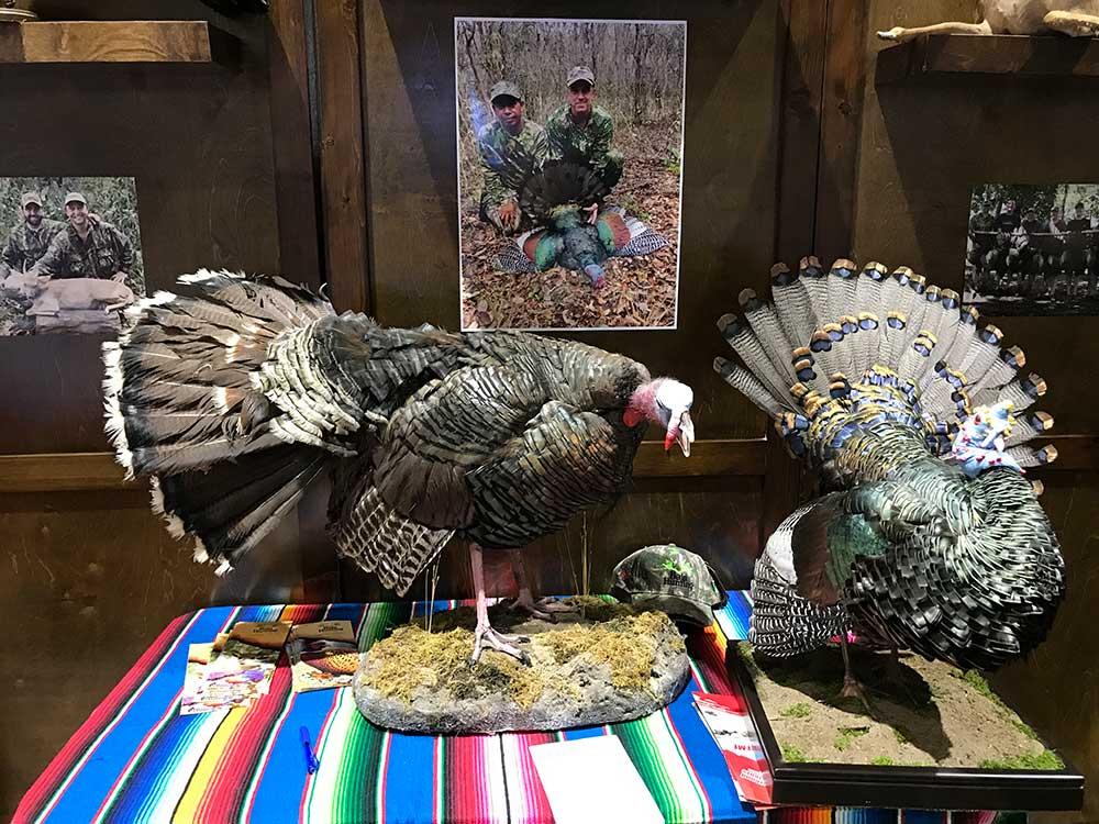 safari club international convention turkey taxidermy