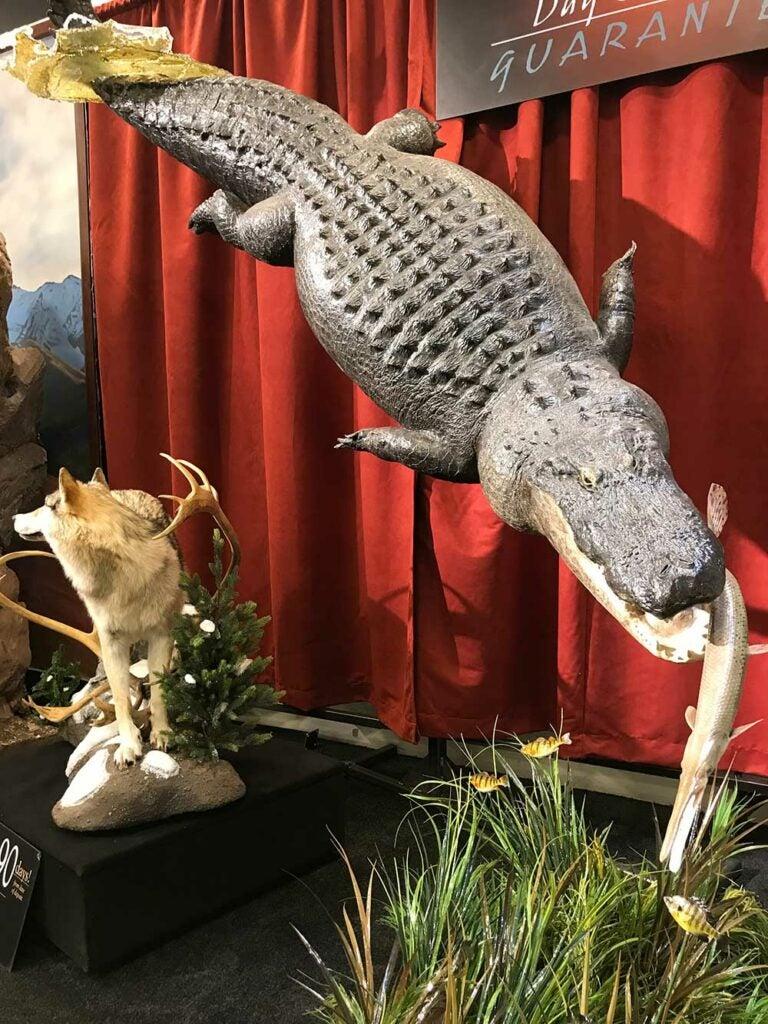 safari club international convention alligator taxidermy
