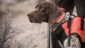 The Best Hunting Dog Breeds for Every Game Animal