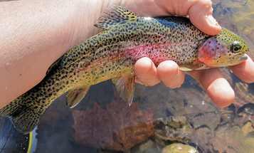 A Rainbow in Winter: Trout Fishing the Cold Season