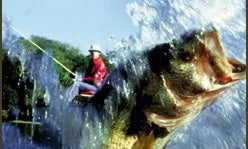 "Fishing's ""Fib Factors"""