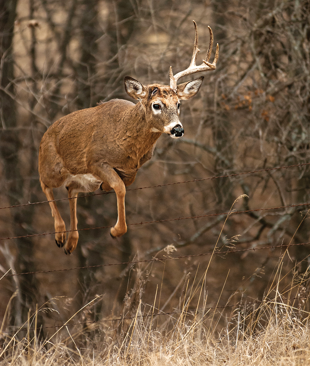 Why Do Bucks Lose Their Antlers? The Science Behind Sheds
