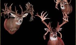 Bizarre Bucks