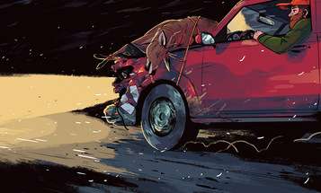 Bumper Crop: Turning Roadkill Game into Table Fare