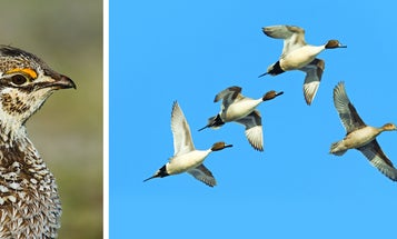 Back Country Adventures: Restorative Birds