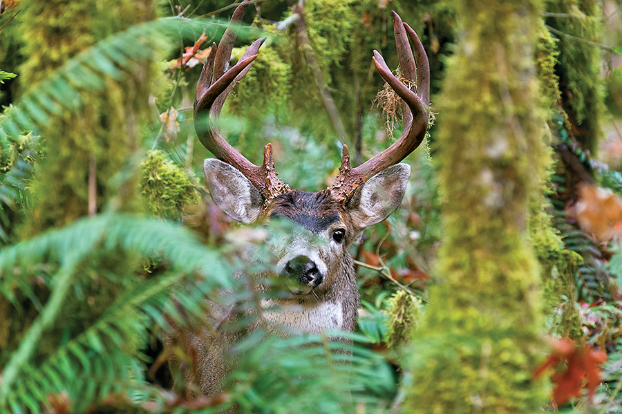httpswww.outdoorlife.comsitesoutdoorlife.comfilesimport2015blacktail2.png