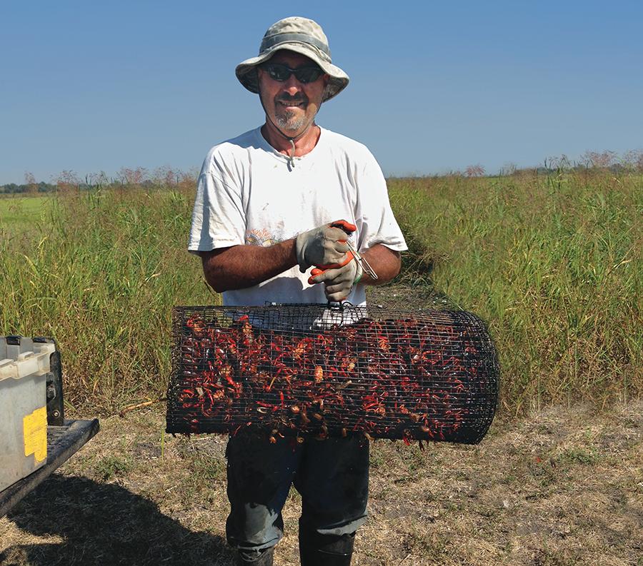 Live Bait Bosses: The Crayfish King
