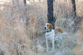 httpswww.outdoorlife.comsitesoutdoorlife.comfilesimport2014importImage2007legacydogs1.jpg