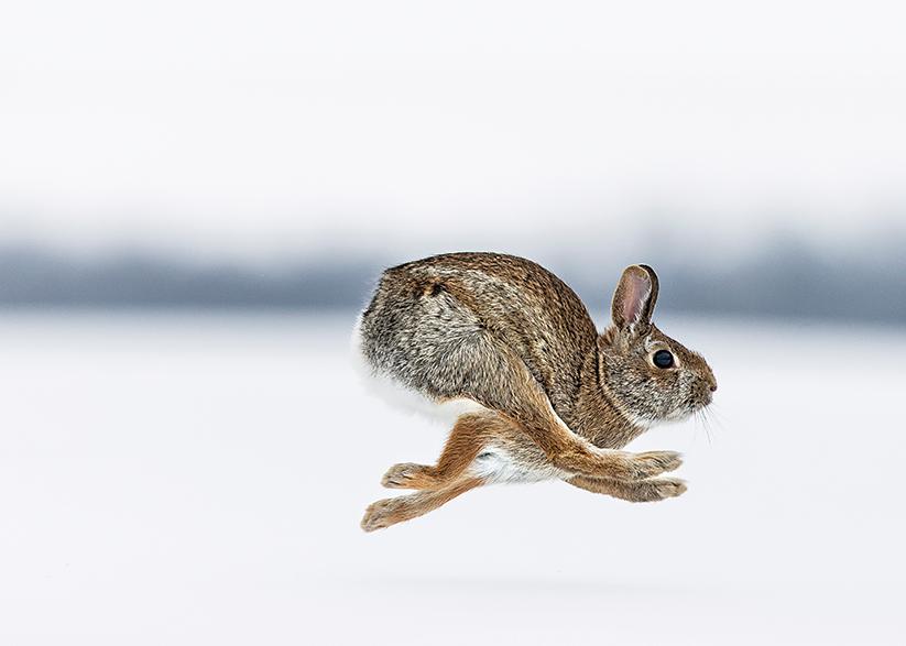 The Rabbit Rundown
