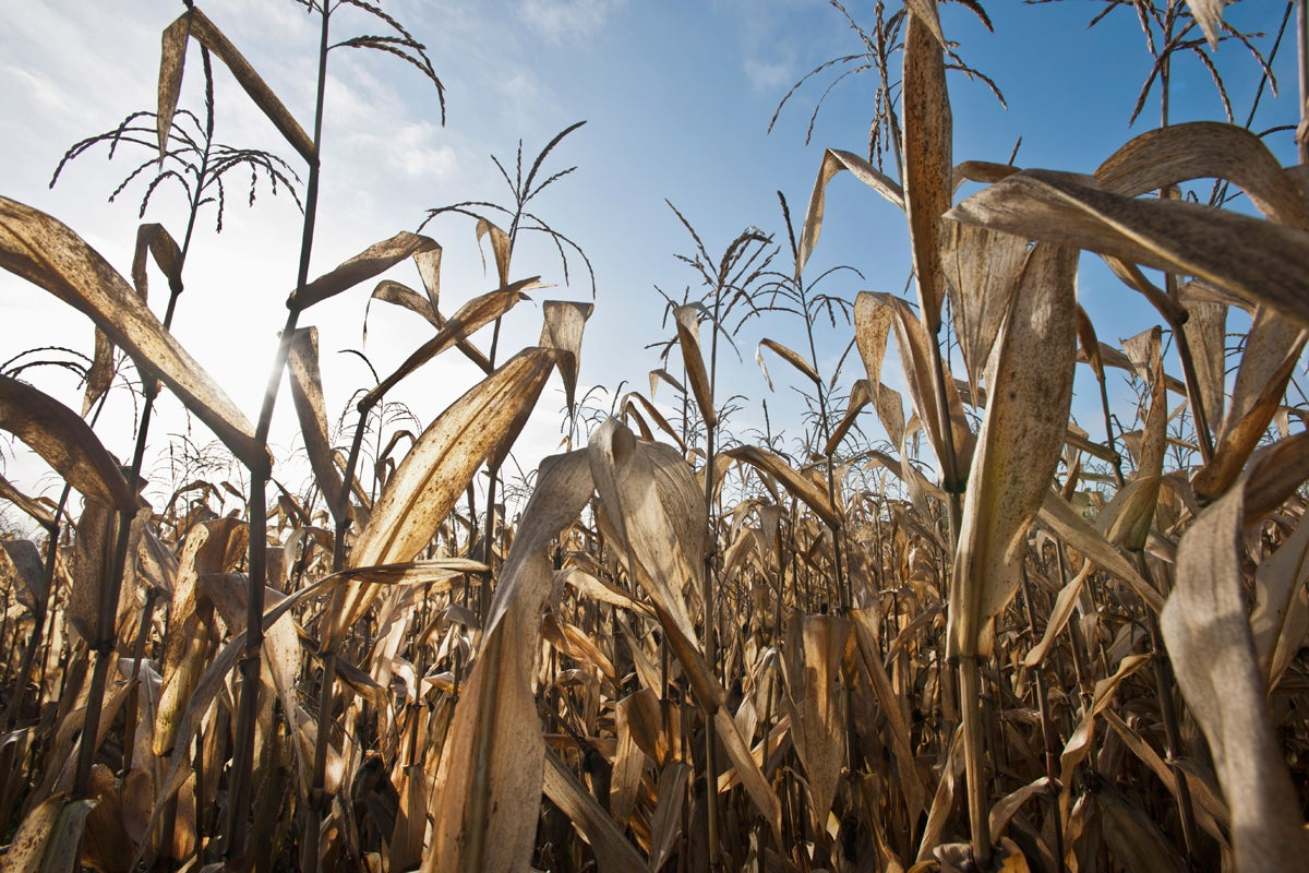 Land Management: How to Find Free Food-Plot Seed
