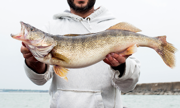 A New Study Provides Clues to Finding Your Next Walleye Fishing Hotspot