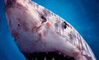 Shark Repellents: Minimizing the Great White Threat