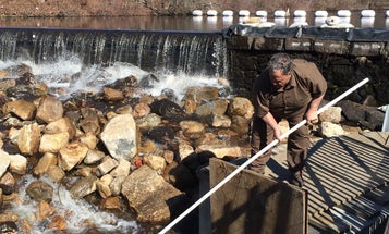 This UPS Driver Helps Herring Spawn by Scooping them Over Dams