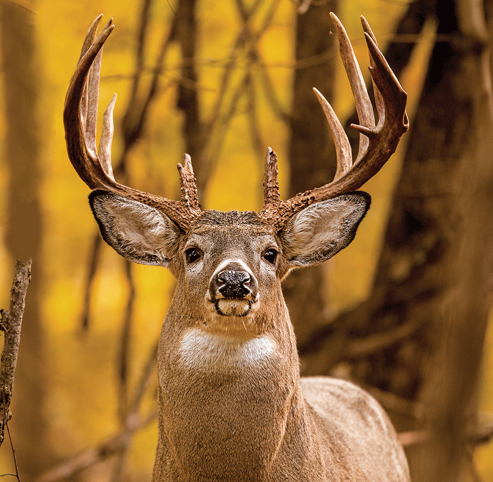 Best Month Ever: Hunting and Fishing The Golden Days of October