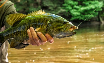 Our Top 5 Hottest Fly Patterns for Smallmouth Bass