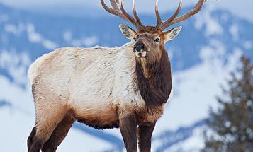 Public and Private Land Wapiti: Proven Strategies for Three Modern Elk Hunts