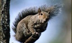 Squirrel Hunting Destination:  Talladega, AL