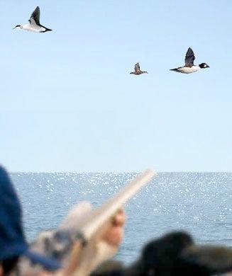 Outdoor Life's Duck Hunter