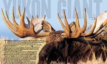 Yukon Giant