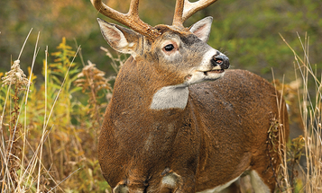 5 Ways Bowhunters Can Stop a Buck in His Tracks