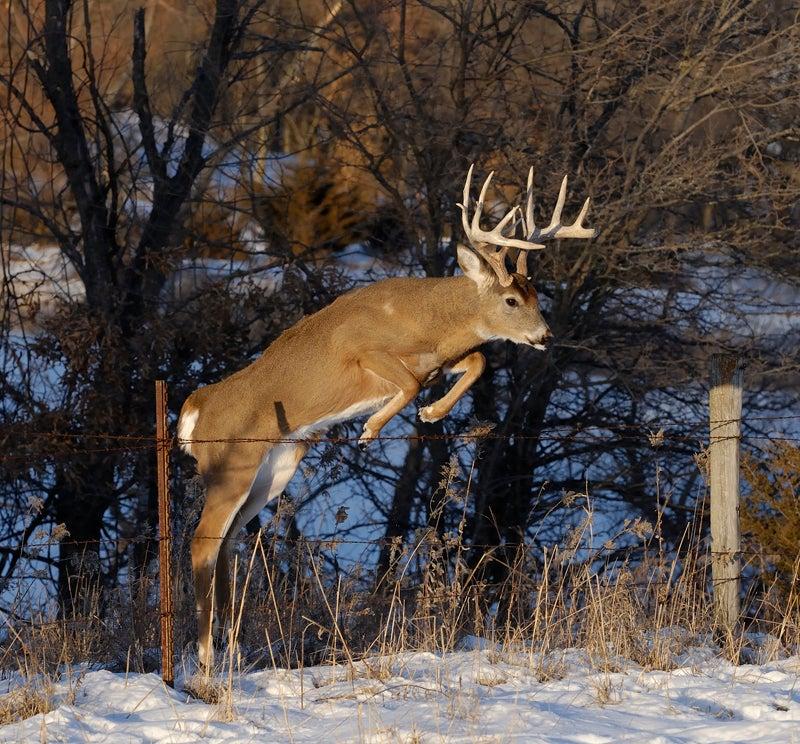 85 Late-Season Deer Tips to Save Your Season