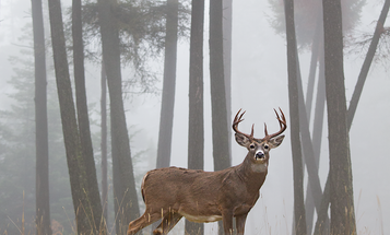 Is it Time to Rethink the North American Model of Wildlife Conservation?