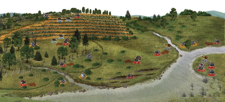 turkey terrain