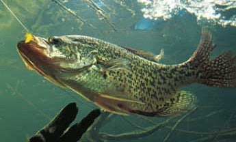 The Ultimate Crappie Guide