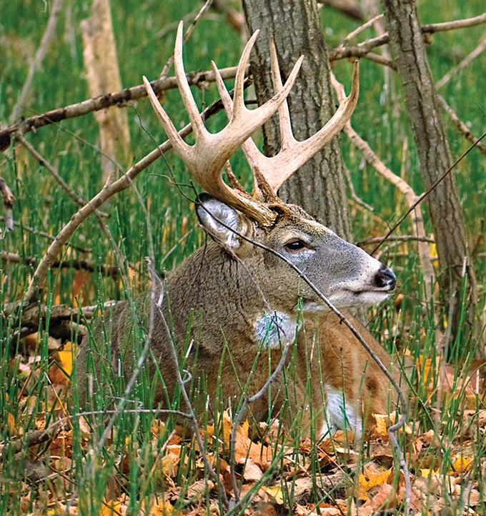 Whitetail Tips: How to Map Your Hunting Area