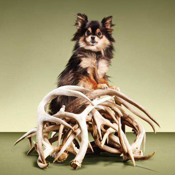 DIY Project: Train a Dog to Hunt Sheds