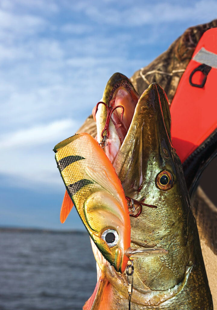 muskie, muskellunge, muskie fishing, spring muskie fishing, green bay muskie, green bay muskie fishing